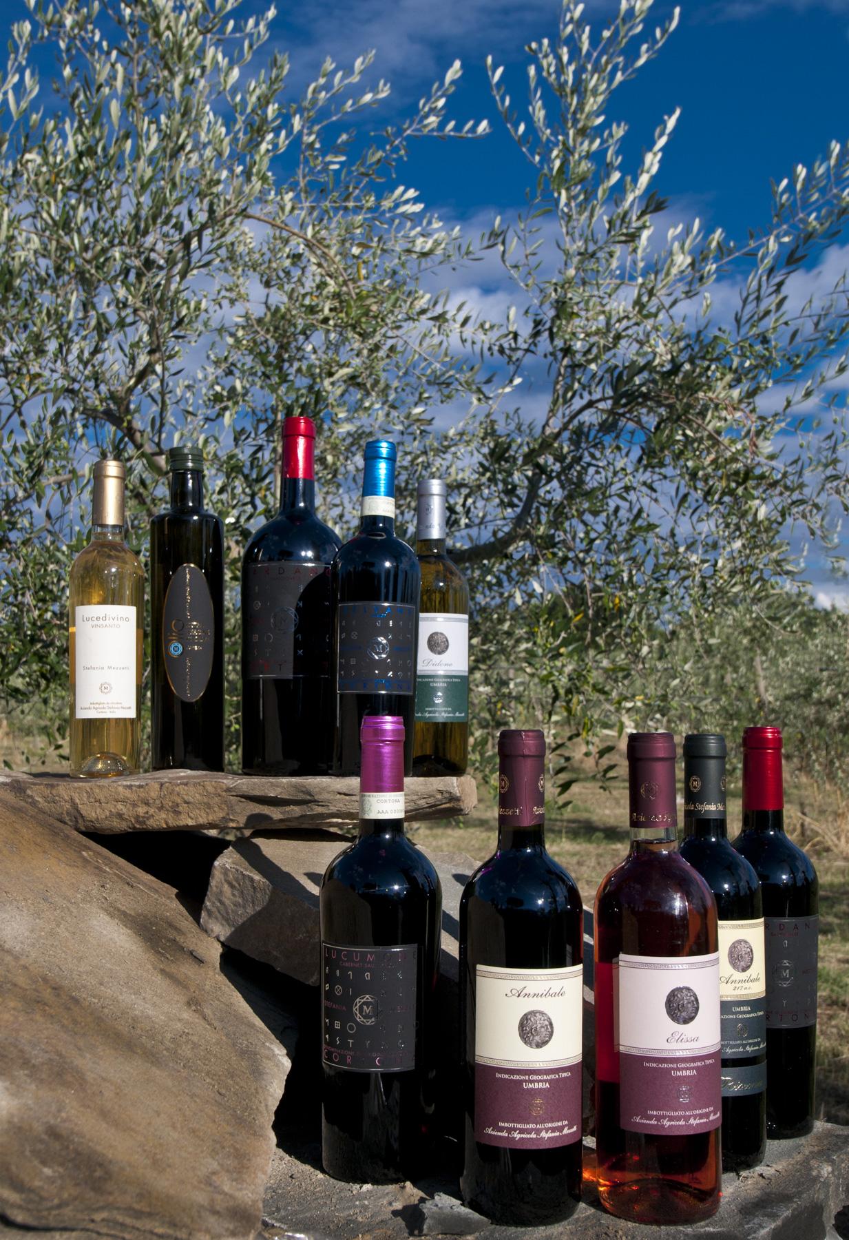 Italien_Umbrien_Casa Colonia_vinproduktion